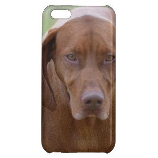 Lovable Vizsla Case For iPhone 5C