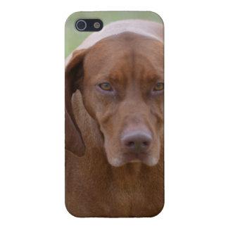 Lovable Vizsla iPhone 5 Cases