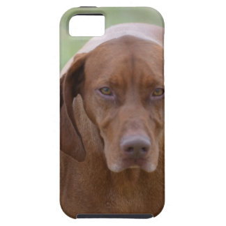 Lovable Vizsla iPhone 5 Cover