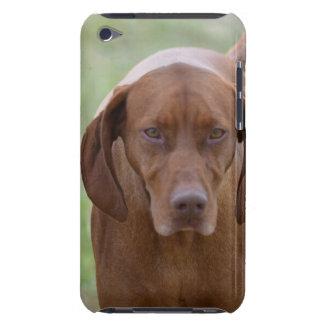 Lovable Vizsla iPod Case-Mate Case