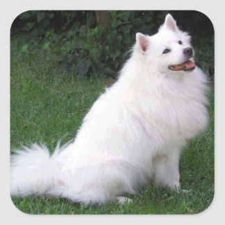 Love American Eskimo Puppy Dog Sticker / Label