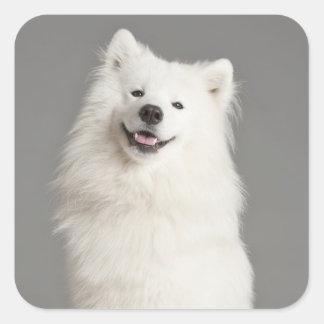 Love American Eskimo Puppy Dog Sticker / Label
