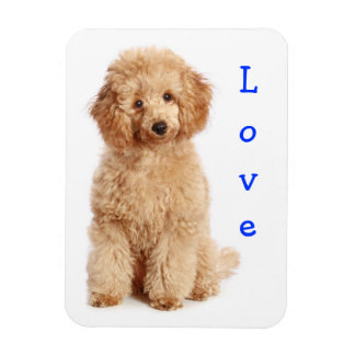 Love Apricot Poodle Toy Puppy Dog Fridge Magnet