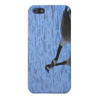 Love Birds Color iPhone 5/5S Case