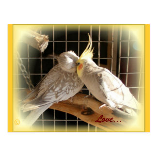 Love Birds Postcard