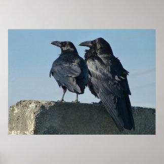 Love Birds Posters
