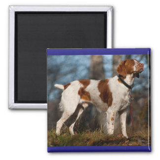 Love Brittany Spaniel Puppy Dog 2 Inch Square Magnet