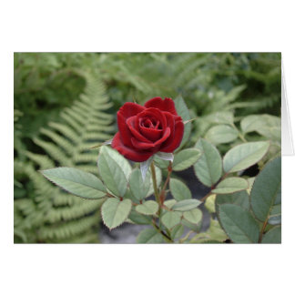 Love Caring Friendship Relationship Red Rose Card
