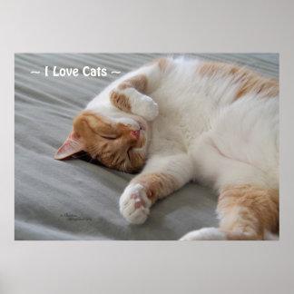 Love Cats cute cat sleeping Poster