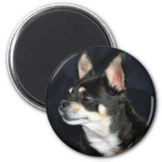 Love Chihuahuas Magnet