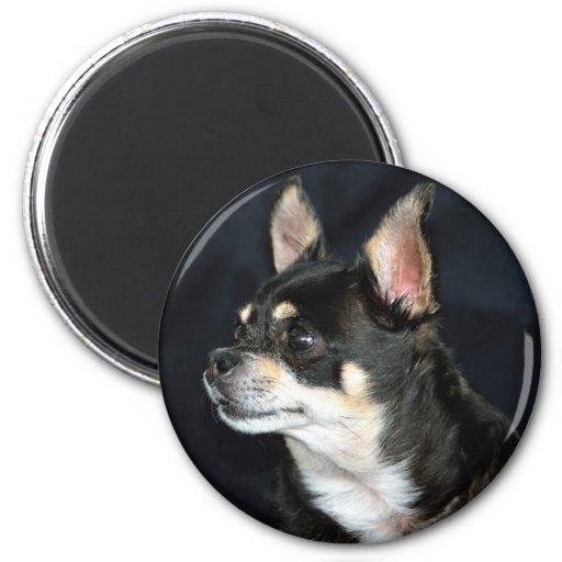 Love Chihuahuas Refrigerator Magnets