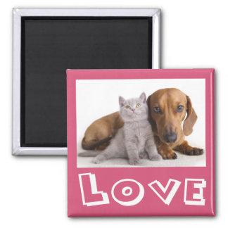 Love Dachshund Puppy Dog And Kitten Magnet