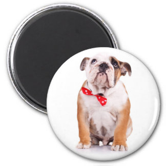 Love English Bulldog Puppy Dog Magnet