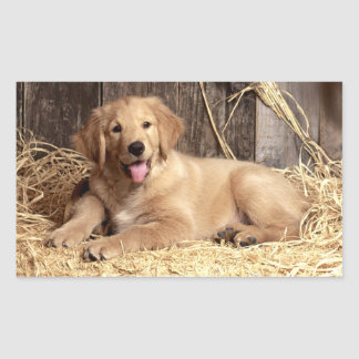 Love Golden Retriever Puppy Dog Stickers