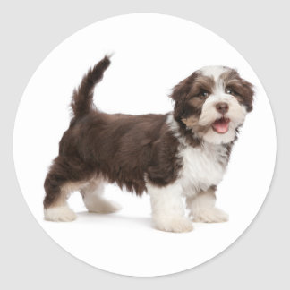 Love Havanese Chocolate Brown Puppy Dog Hello Classic Round Sticker