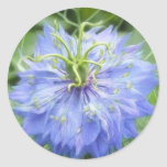 Love In A Mist - Nigella Damascena Round Stickers