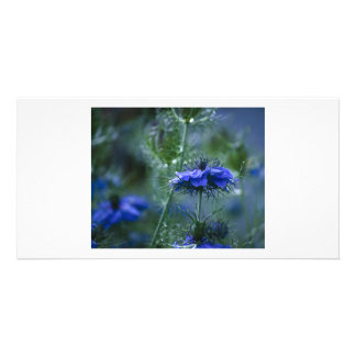 Love is a Mist Picture Card