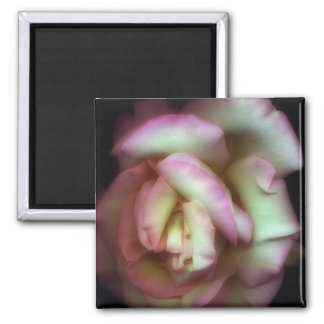 <Love is a Rose> by Nathan Griffith Fridge Magnets