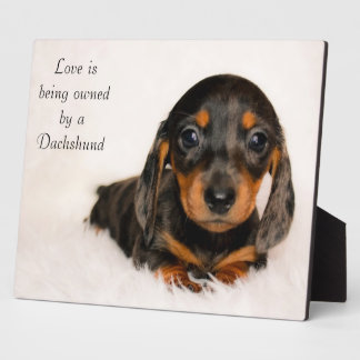 Love is being owned by a Dachshund Plaque