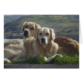 Love is Golden Greeting Card