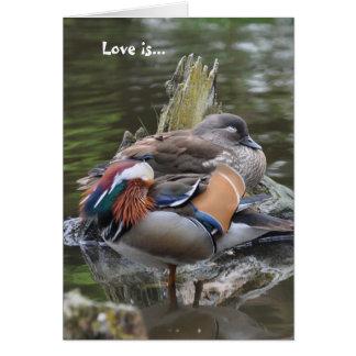 Love is...Sleeping Mandarins Card