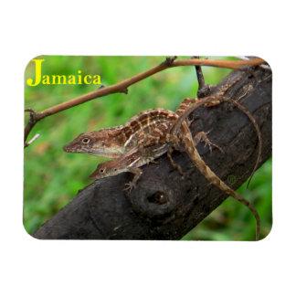 Love Jamaica Lizards Refrigerator Magnet