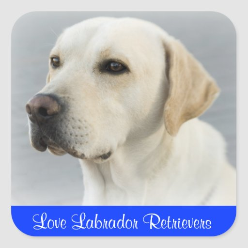 Love Labrador Retriever Puppy Dog Stickers