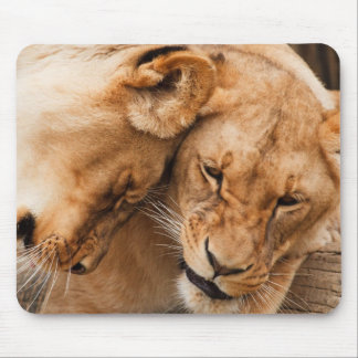 Love Lions cuddling animals wildlife Mouse Pad