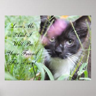 Love Me Kitten Poster