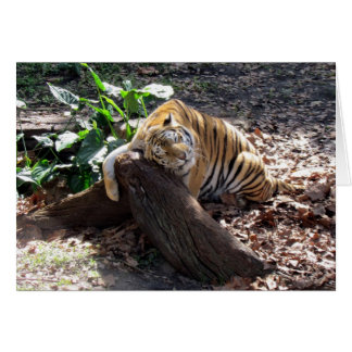 Love Me Like a Rock - Bengal Tiger Greeting Card