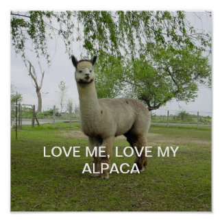Love Me, Love My Alpaca Poster