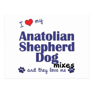 Love My Anatolian Shepherd Dog Mixes (Multi Dogs) Postcard