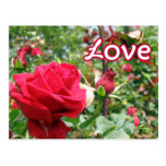Love Note Roses Postcard