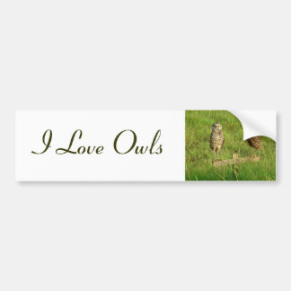 Love Owls Bumper Sticker
