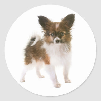 Love Papillon Puppy Dog Hello, Thinking of You Classic Round Sticker