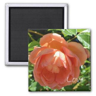 Love-Peach Rose Square Magnet