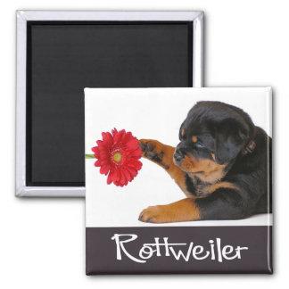 Love Rottweiler Puppy Dog Black & White Magnet