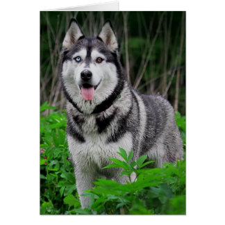 Love Siberian Husky Puppy Dog - Blank Card