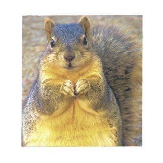 Love squirrel_ notepad