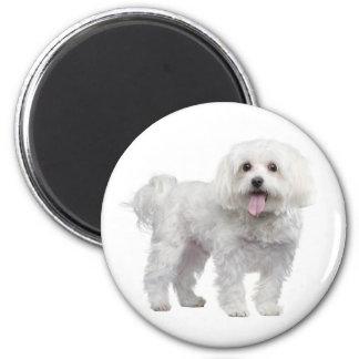 Love White Maltese Puppy Dog Fridge Magnet