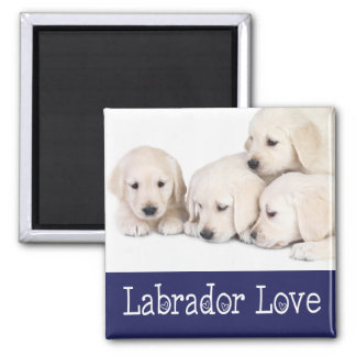 Love Yellow Labrador Retreiver  Puppies Magnet