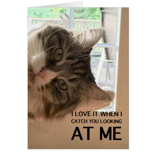 Love Your Cattitude Note Card