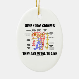 Love Your Kidneys They Are Vital To Life (Nephron) Double-Sided Oval Ceramic Christmas Ornament
