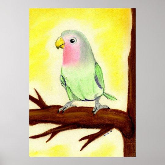 Lovebird Bird Portrait Poster