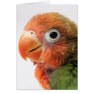 Lovebird Chick | Agapornis papillero Card