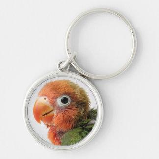 Lovebird Chick | Agapornis papillero Key Ring