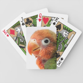 Lovebird chick on white background. bicycle playing cards