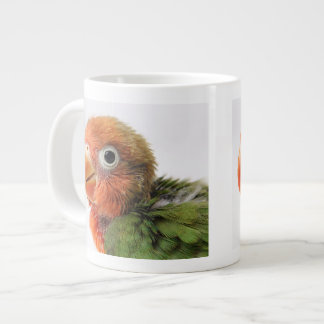 Lovebird chick on white background. large coffee mug