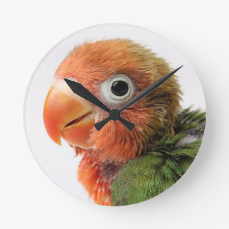 Lovebird chick on white background. round clock