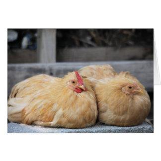 Lovebird Chickens Greeting Card